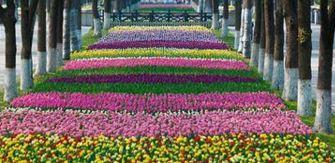 上海南汇鲜花港怎么样?上海鲜花港好玩吗?