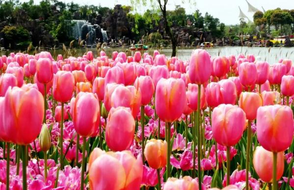 上海鲜花港一日游 上海鲜花港怎么预约