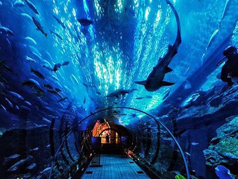 长沙海方海洋公园游玩攻略,长沙海方海洋公园门票价格