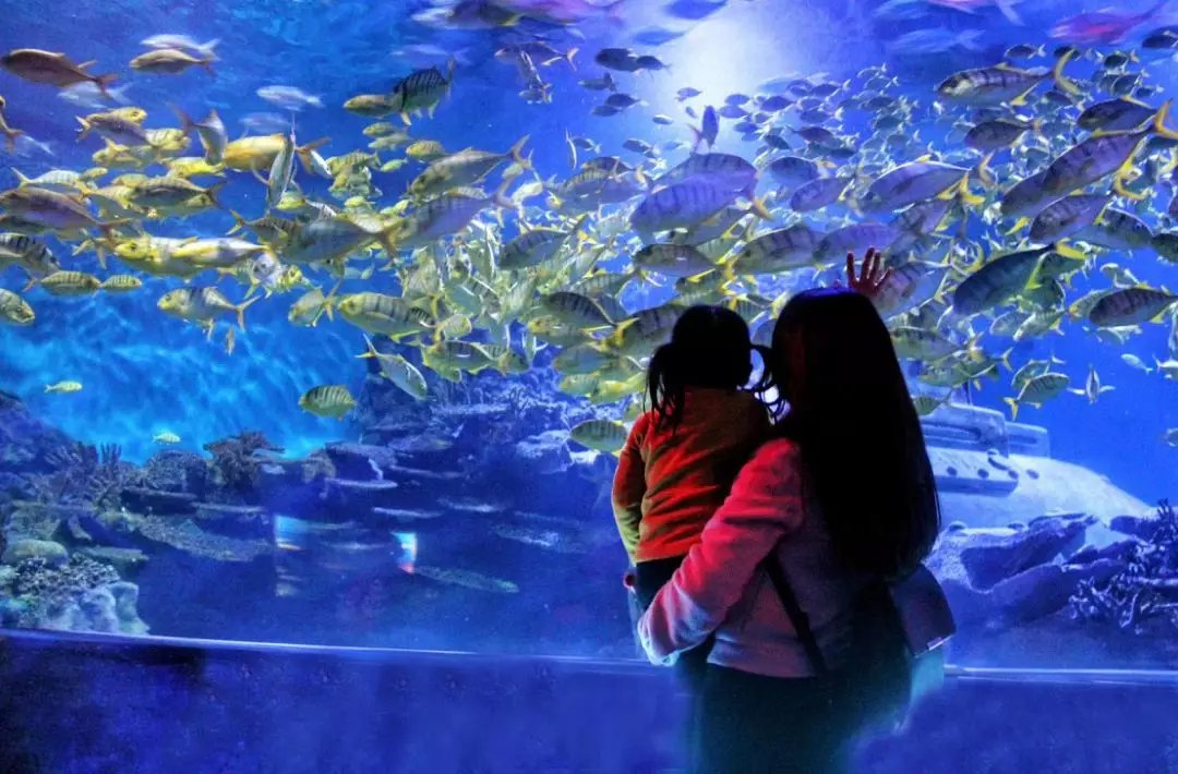 长沙海立方海洋公园门票多少钱?好玩吗?
