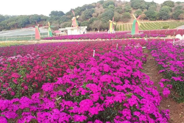 2020东莞松山湖梦幻百花洲百花节什么时候?地址在哪?