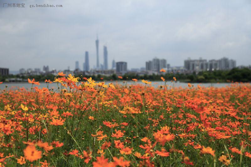 广州海珠湿地公园预约方式及开放时间一览