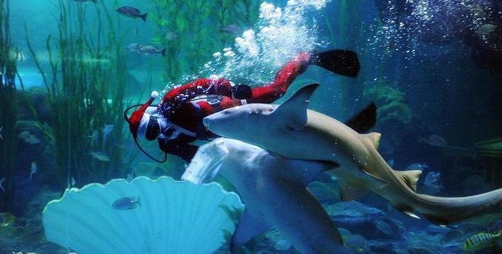 南京海底世界门票价格/在线预订/开放时间