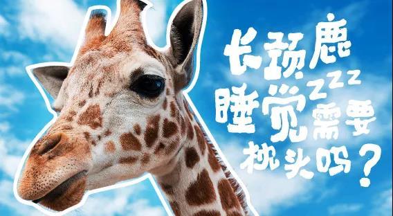银基动物王国2020夏令营:疯狂动物城―奇妙的朋友
