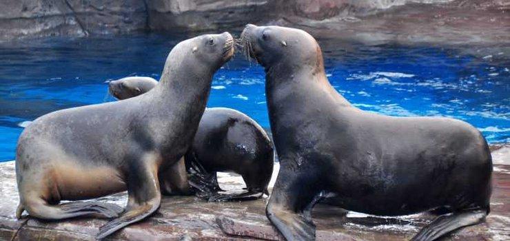 成都海昌极地海洋公园营业时间/门票价格/订票电话
