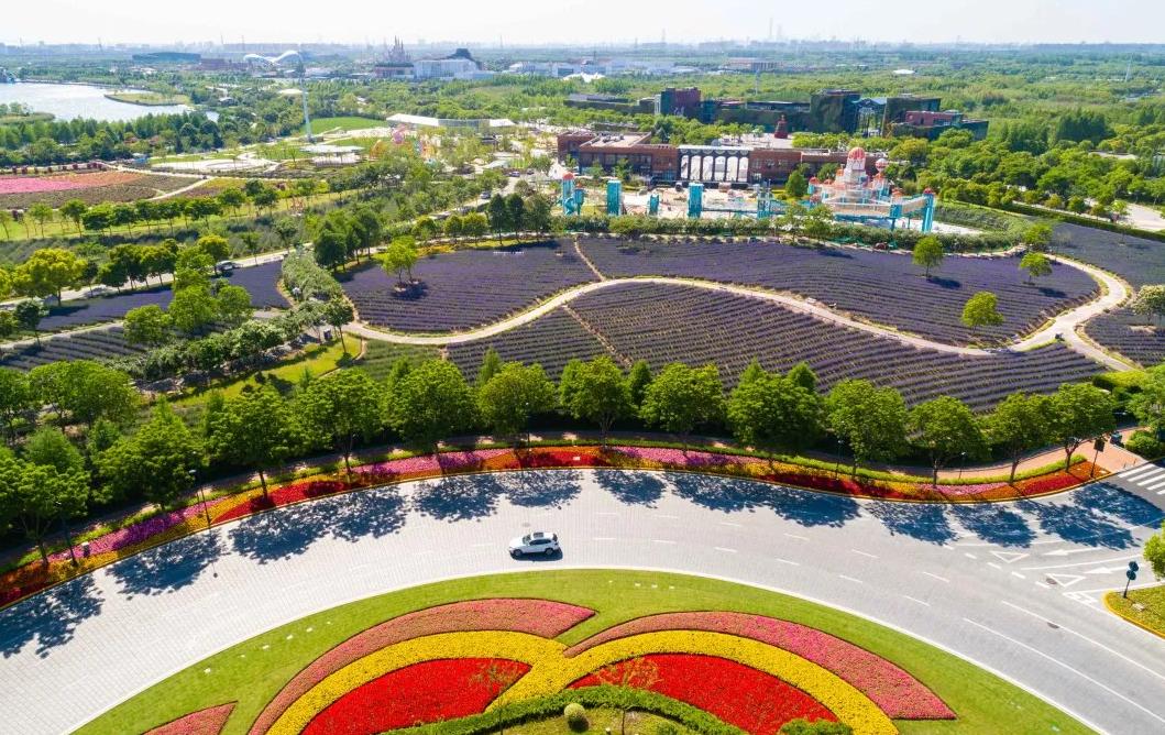 上海薰衣草公园在哪里?怎么去?