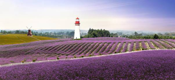 紫颐香薰山谷
