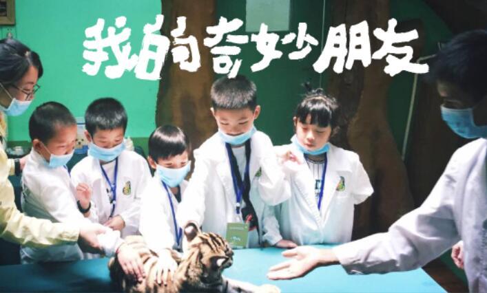 银基动物王国夏令营:疯狂动物城奇妙的朋友(2日)