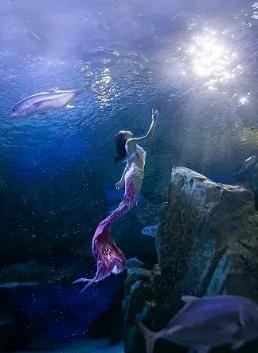 成都SSI基础美人鱼课程