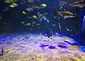 上海鹏新嘉定海洋世界(票价、停车政策、游玩项目)信息一览