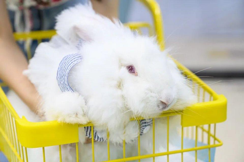 安哥拉巨兔主题馆