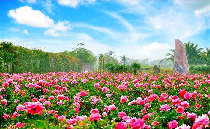 南京湖熟古桩月季园