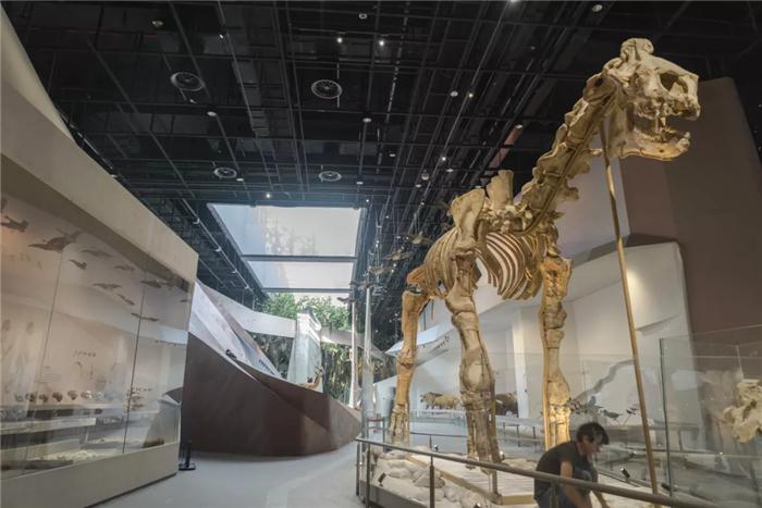 武汉自然博物馆·贝林大河生命馆