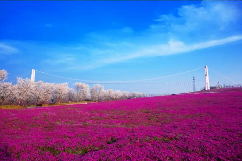 日照花仙子生态旅游区