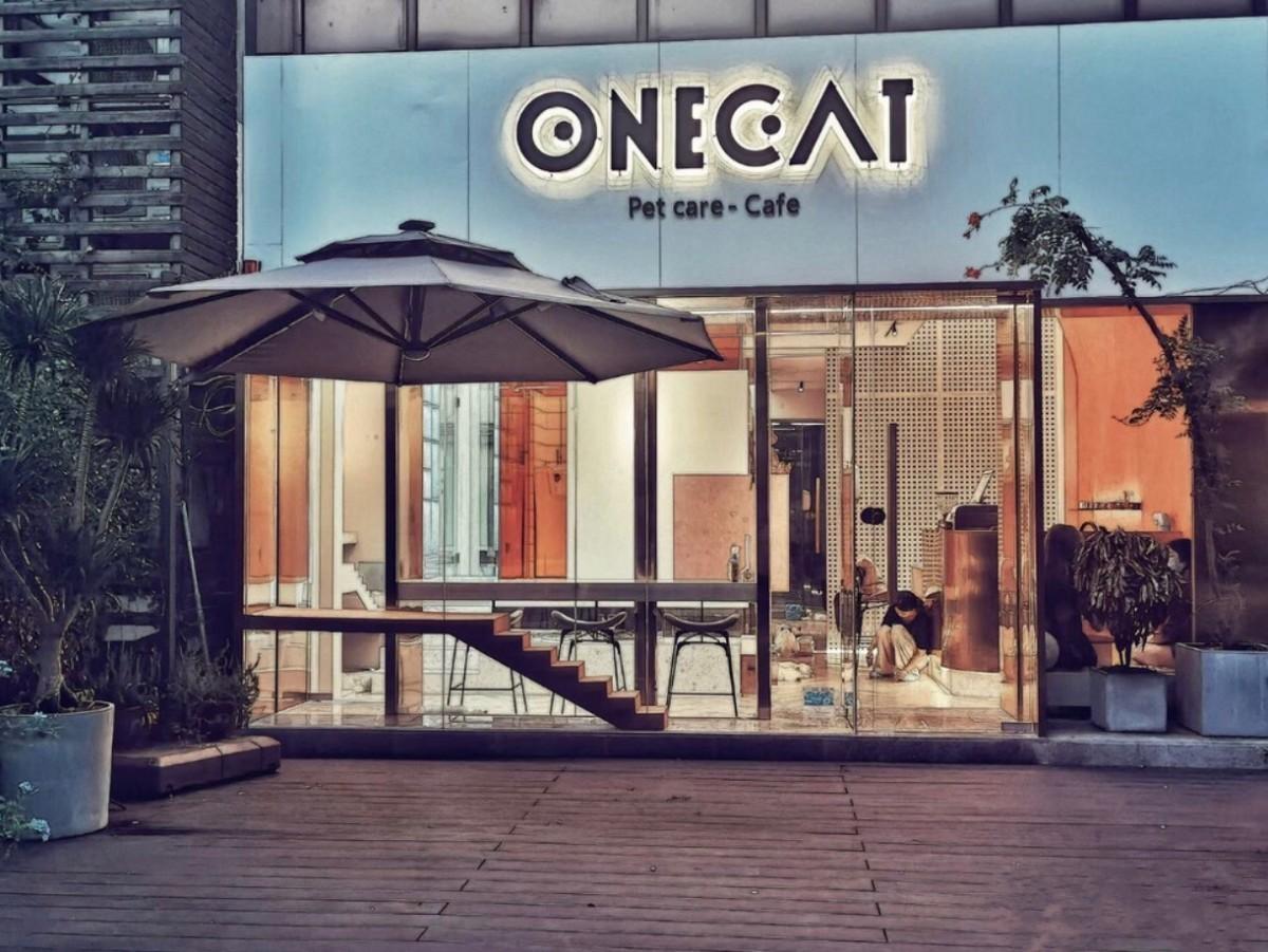 苏州onecat壹猫宠物工作室