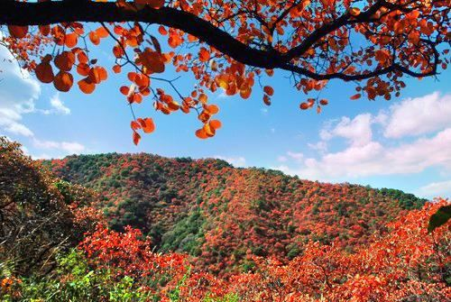 甘山国家森林公园
