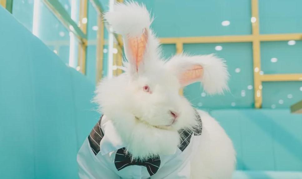 上海安哥拉巨兔主题馆