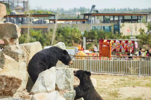 邯郸佛山野生动物园