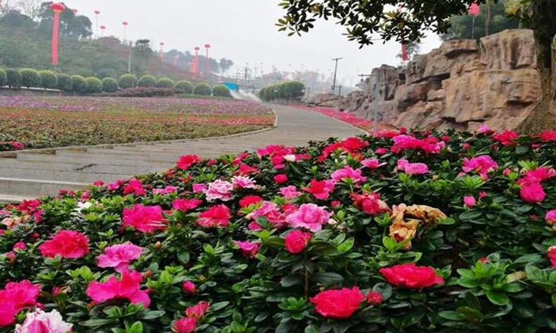【重庆】南湖多彩植物园
