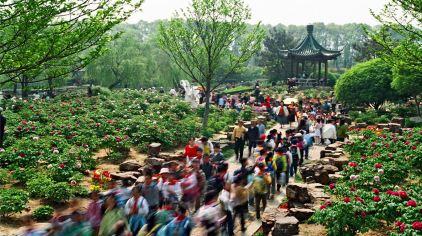 尚湖·牡丹园——江南最大的牡丹园