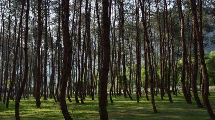 2 快活林