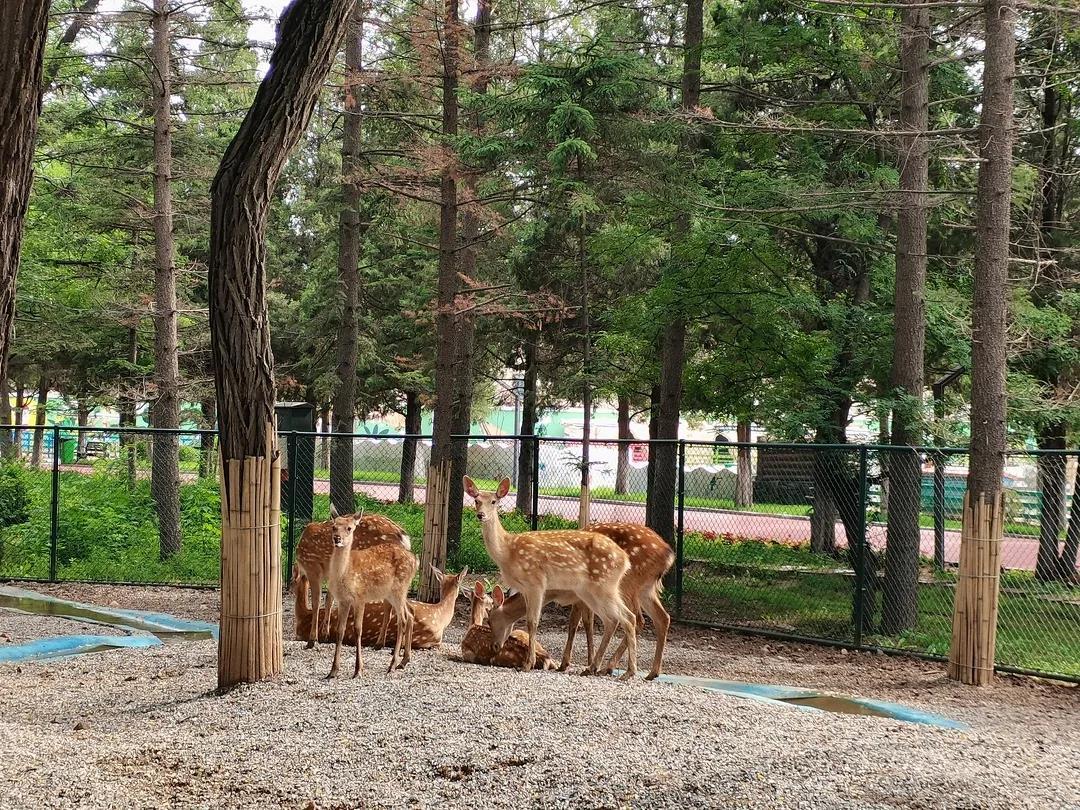 鞍山动物园